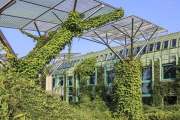 גן בוטני עשיר בצמחייה (צילום: shutterstock)