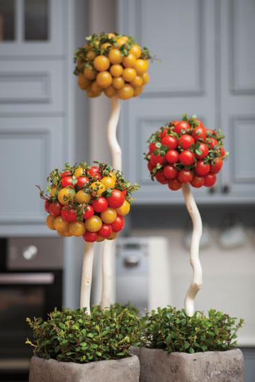 זרי עגבניות שרי (צילום: שירן כרמל)