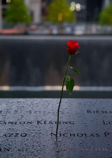 פרח שהונח על בריכת הזיכרון במהלך פתיחת המוזיאון (צילום: Jin Lee)