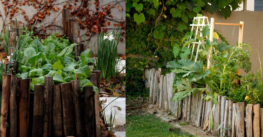 אפשר למקם גם במרפסת.  ערוגת ירק מוגבהת (צילום: שושן דגן)