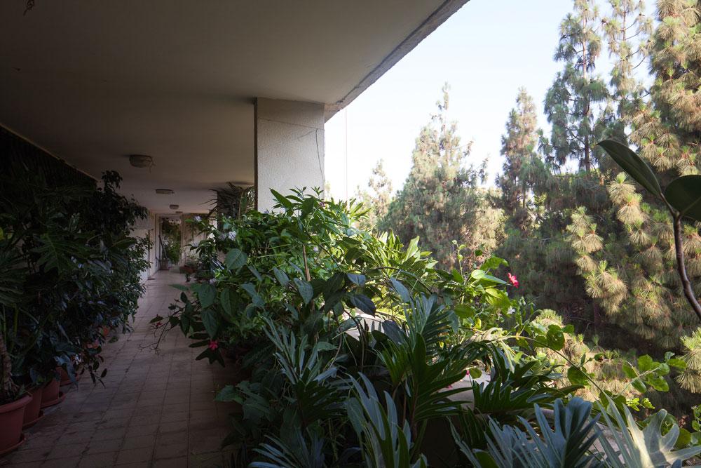 מבט מ''הרחוב'' בקומה 5, הטובל בירק בין צמרות העצים. זרימת אוויר, שבירת השבלונה וגם הידוק הקשר בין השכנים מעבר למפגש מול תיבות הדואר למטה (צילום: טל נסים)