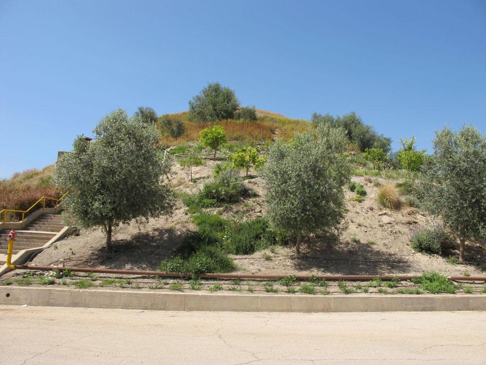 אחת היצירות האדריכליות הקיצוניות שתוכננו בישראל היא הקימרון. מבחוץ לא רואים כלום - המבנה מוסתר תחת אדמה וצמחייה כמו-טבעית (צילום: מיכאל יעקובסון)