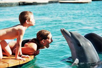 חוף הדולפין ריף