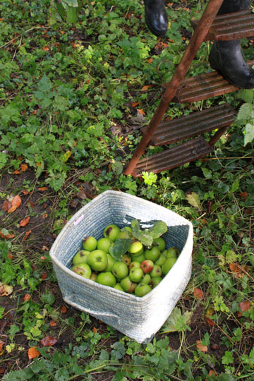 מגדלת את הירקות והפירות בעצמה. קטיף תפוחים בגינה של איימן (צילום: Imen McDonnell)