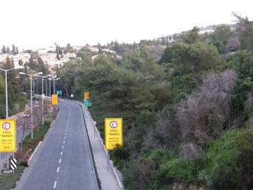 גבעת זמר. 600 עצים צפויים להיכרת במסגרת פריצת הדרכים (צילום: מגמה ירוקה)