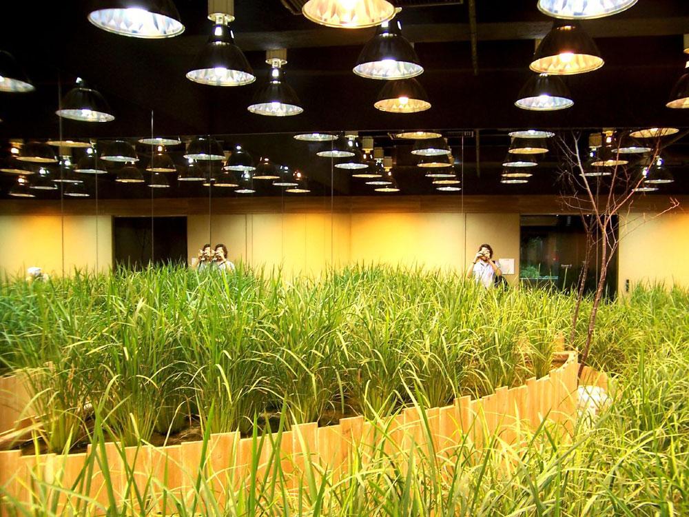גידולים חקלאיים מתחת לאדמה? זה אפשרי לחלוטין, ולא רק בדירות מסתור של מגדלי מריחואנה אלא בפרויקט גדול ביפן (צילום: Dimitri dF, cc)