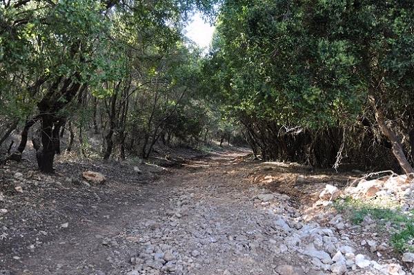הליכה לאורך הנחל בצל עצי דולב (צילום: עמיקם חורש, באדיבות אוצרות הגליל)
