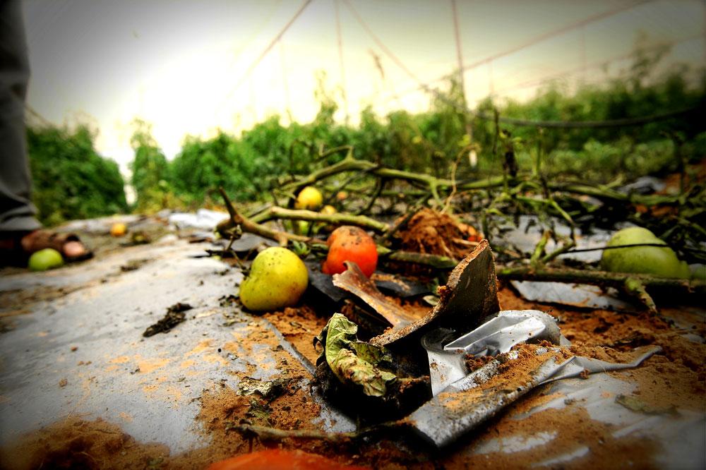 כששומעים על ''נפילה בשטח פתוח ביישובי עוטף עזה'', זו המציאות בשדה. ''לא נגרם כל נזק'' הוא משפט שאינו מחובר לפרנסתם של החקלאים (צילום: אבי פז)