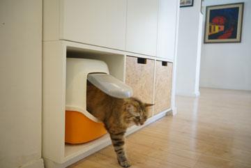 פהיטה החתולה בביתה החדש (צילום: נועם דוד-סטודיו גלימפס)
