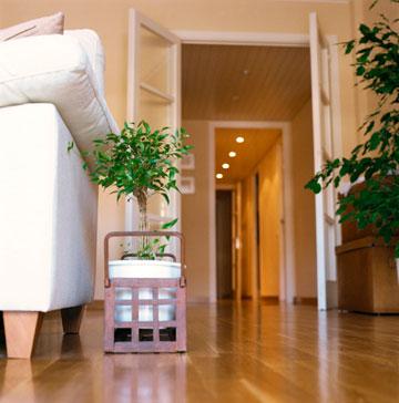 לא כדאי להעמיס את הבית בצמחים (צילום: thinkstock)