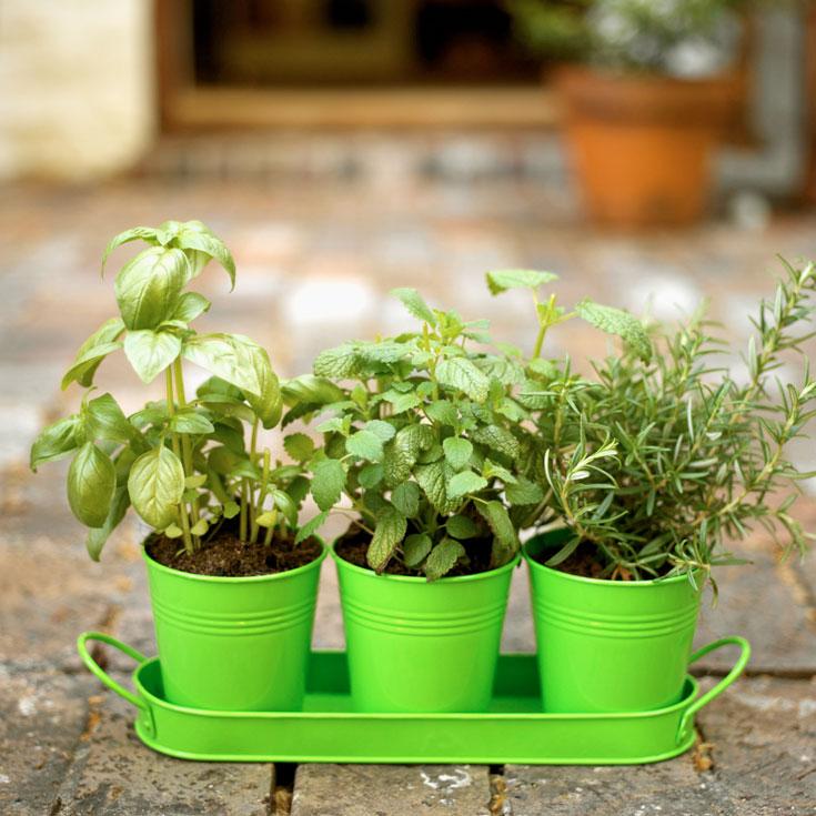 תחתיות לעציצים - אחת הבעיות הגדולות בגידול צמחי בית (צילום: thinkstock)