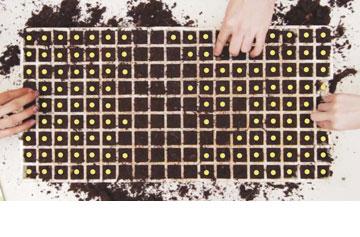 ממקמים זרע אחד בכל תא  (צילום: אביגיל רוביני)