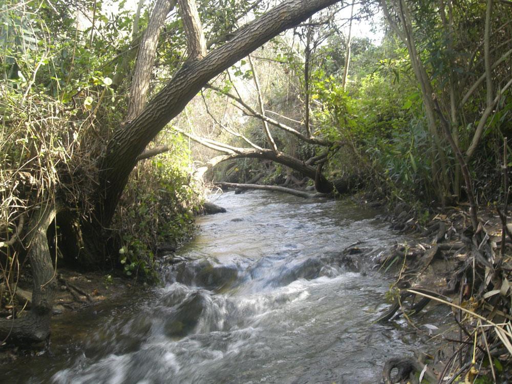 המג'רסה. ללכת בתוך מים קרירים (צילום: אריאלה אפללו)