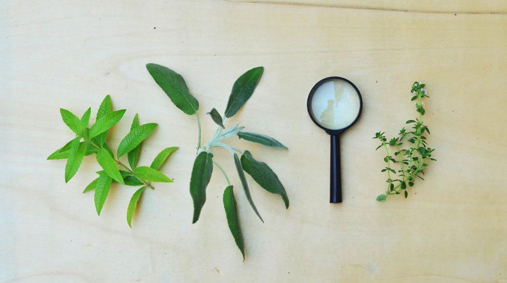 אפשר להגן על הצמחים ממזיקים גם ללא ריסוס (צילום: אביגיל רוביני)