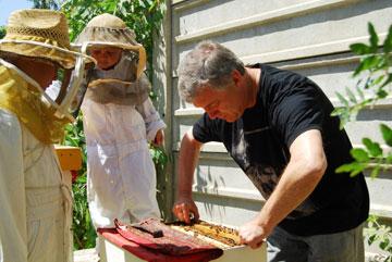 פסטיבל הדבש (צילום: שמיר)