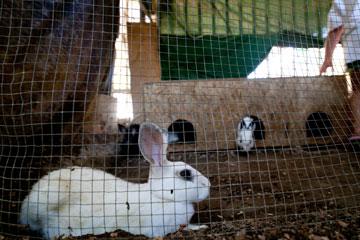 הילדים בגן של שירלי הגיעו גם בחופשת הקיץ כדי להאכיל את החיות (צילום: דור נבו)