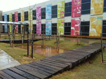 בית הספר הירוק בראשון לציון. סביבה מגוונת