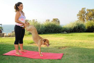 """כלבים בכל גיל צריכים תנועה, והדוגה מאפשרת גם לכלבים מתבגרים להמשיך לזוז"""" (צילום: דפנה קפלן)"""