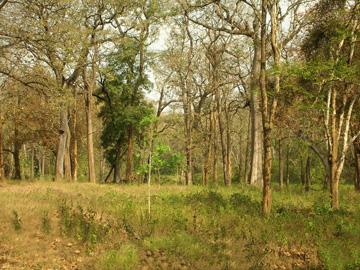 5,500 דונמים מעשה ידי אדם, יער במחוז אסאם שבהודו (צילום: Shutterstock)