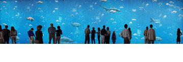 חוף ירושלים. האקווריומים במתחם התת-מימי (באדיבות גן החיות התנכי)