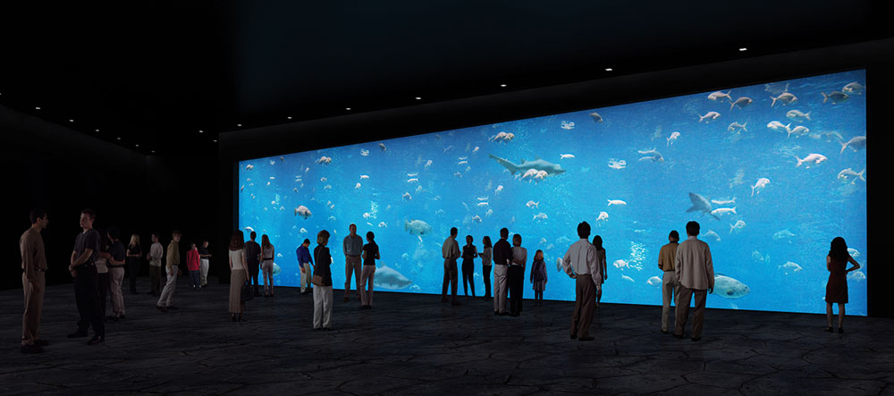 מצפה תת מימי בירושלים? בכך בדיוק מתגאה ראש העירייה, ניר ברקת. אקווריומים ענקיים עם מיטב הדגים של ים התיכון וים סוף, כדי לא לקפח אף אחד (באדיבות גן החיות התנכי)