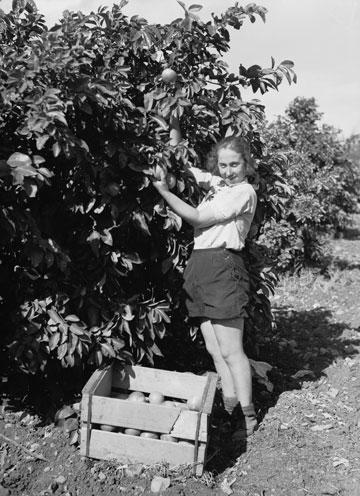 עוד לפני קום המדינה פשטות הייתה צו השעה. מתנדבת בקיבוץ עין חרוד בשנת 1936 (צילום: gettyimages)