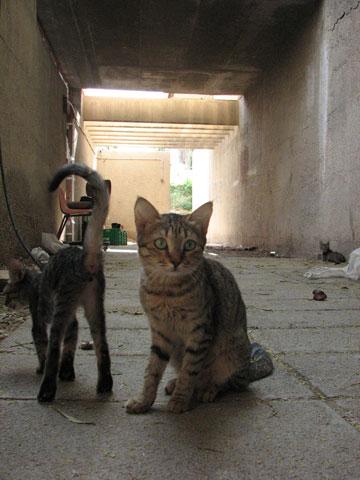 חתולים ב''מצודה'' של נאות הכיכר. ניסוי אדריכלי מרתק (צילום: מיכאל יעקובסון)