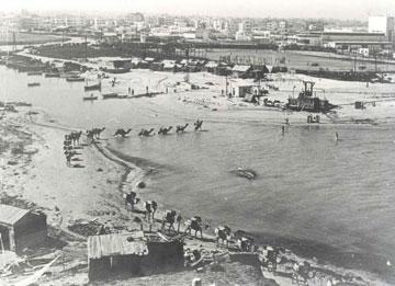 שיירת גמלים חוצה את שפך הירקון, 1934 (צילום: ארכיון חברת החשמל)