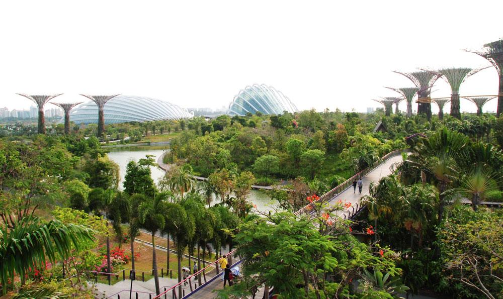 הפארק הבוטני ''גני המפרץ'', הסמוך לנמל סינגפור. זהו מרחב הבילוי החיצוני והמרכזי של תושבי העיר, שהוקם בהשקעה עצומה כדי לשפר את איכות חייהם (צילום: LWYang, cc)