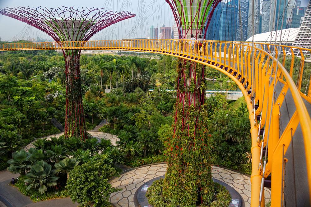 גשרים תלויים מחברים בין 18 עצים מלאכותיים המתנשאים לגובה 50 מטר. למעשה, אלה גנים אנכיים, שבתוכם שולבו מערכות לאיסוף מי גשמים ופאנלים סולאריים (צילום: Jean Baptiste ROUX, cc)