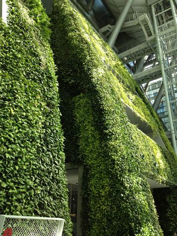 ארץ, עירייה, צמח: המטפסים בבניין העירייה (צילום: נטע אחיטוב)