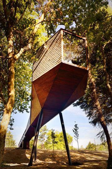 אולי היו צריכים להתקין בתים על העצים כמו כאן? (צילום: Ricardo Oliveira Alves)