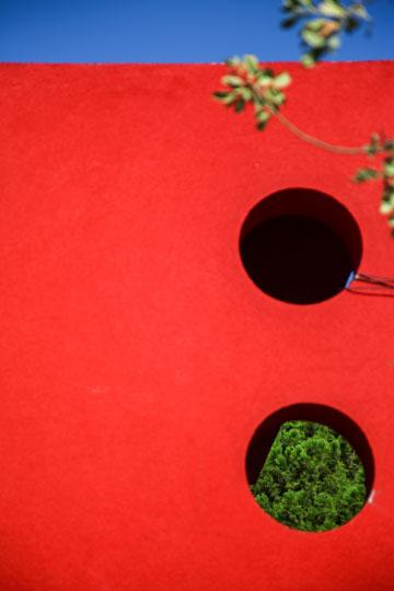 אדום עז. הגן ברמת בגין, חיפה (צילום: אבישג שאר ישוב)