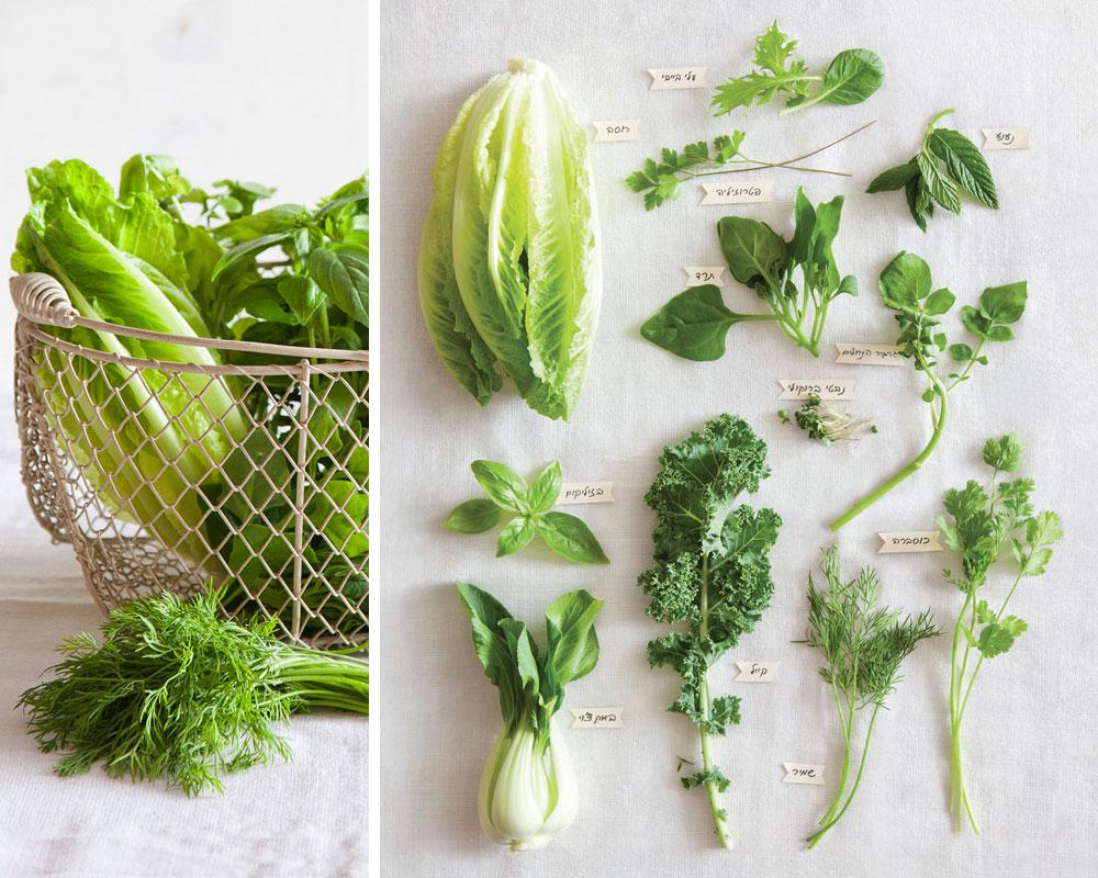 מבחר עלים ירוקים. עשירים בסיבים תזונתיים ונוגדי חימצון (צילום: יוסי סליס)