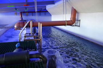 שואבים מי ים מעומק 40 מטרים (צילום: מיכאל יעקובסון)