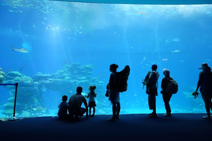 קאהן החליט שאת המראות התת-ימיים המרהיבים, השמורים רק לצוללנים, יש לאפשר לכל אדם, בכל גיל ובכל מצב בריאותי  (צילום: מיכאל יעקובסון)