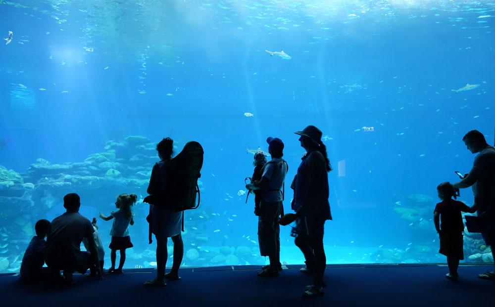 מתבוננים בכרישים ובאלפי הדגים ששוחים לצידם, בבריכה החדשה. ההקמה לא נגמרה עדיין, ואלפי דגים ממשיכים לזרום פנימה מעומק ים סוף (צילום: מיכאל יעקובסון)