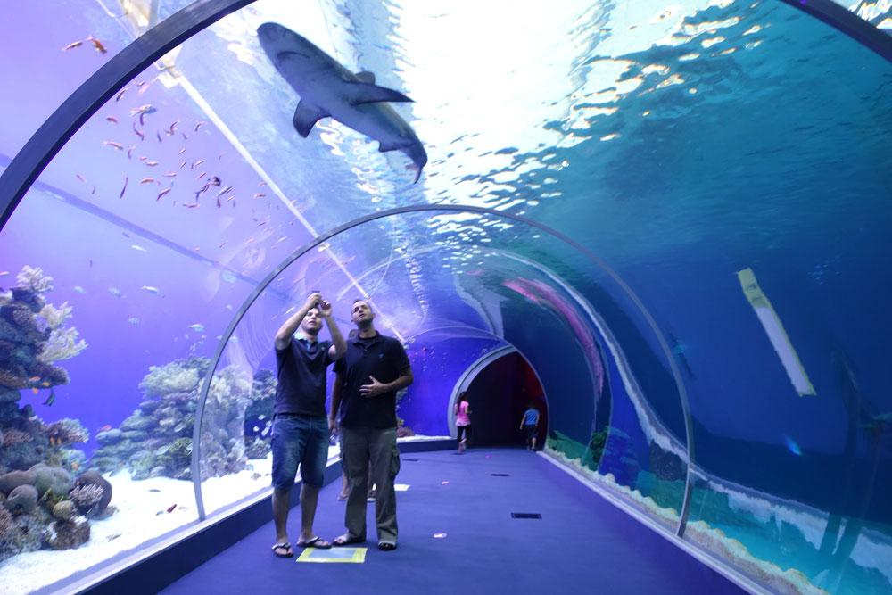 שרוול זכוכית מאפשר לצעוד בתוך הבריכה, כש-18 כרישים משייטים מכל הכיוונים (צילום: מיכאל יעקובסון)