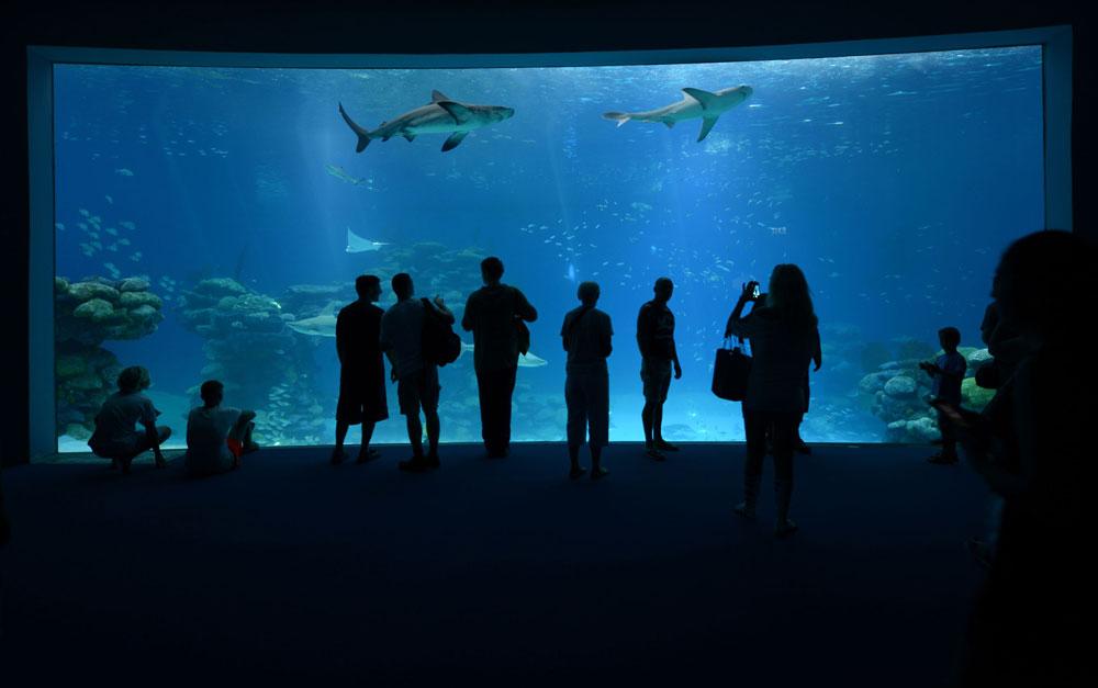 מאז הקמתו, שאפו אנשי המצפה ליצור חוויית צפייה כמעט מדעית, ולעודד תלמידים לדעת יותר על הסביבה הימית  (צילום: עידן קימא ובועז סמוראי)