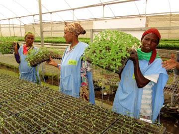 עובדות מקומיות באתיופיה (צילום: באדיבות Fair Planet)
