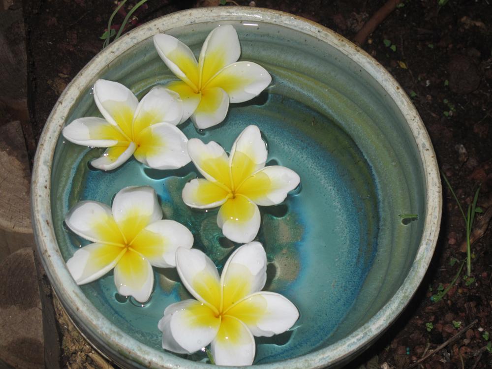ניתן לקטוף מספר פרחים ולהשיטם במים. קישוט ריחני ודינמי לשולחן (צילום: גלית רודה)