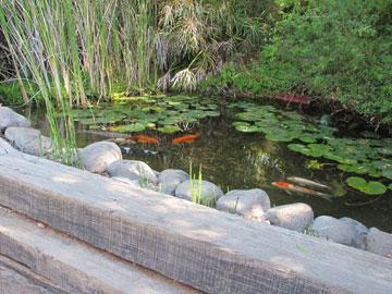 בריכת דגים בפינת החצר (צילום: מיכאל יעקובסון)