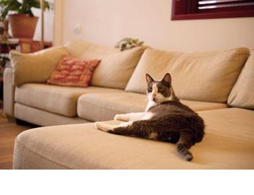 חתול הבית (צילום: דורון עובד)