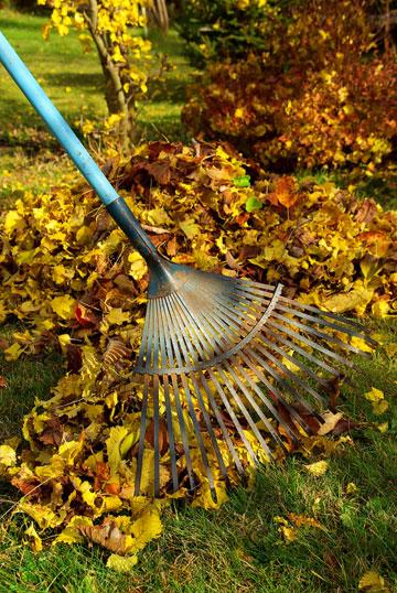 עלי השלכת דווקא מועילים לגינה (צילום: thinkstock)