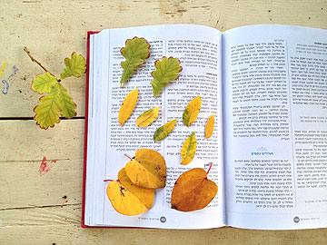 הניחו  את העלים בין דפי ספר עבה כדי ליישר אותם (צילום: שושן דגן)