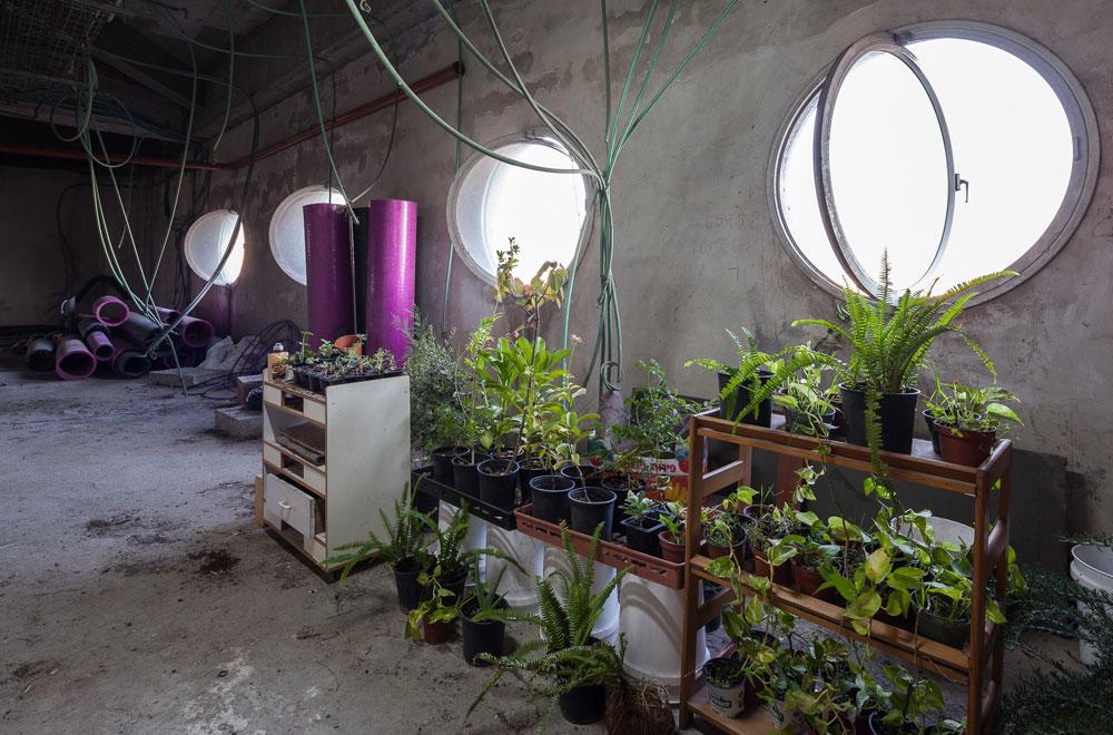 מכאן צמח השם ''אנייה'': הצוהרים העגולים של החלל הנסתר, אחד מני רבים, שבו מגדלים עכשיו צמחים במסגרת הפרויקט (צילום: טל ניסים)