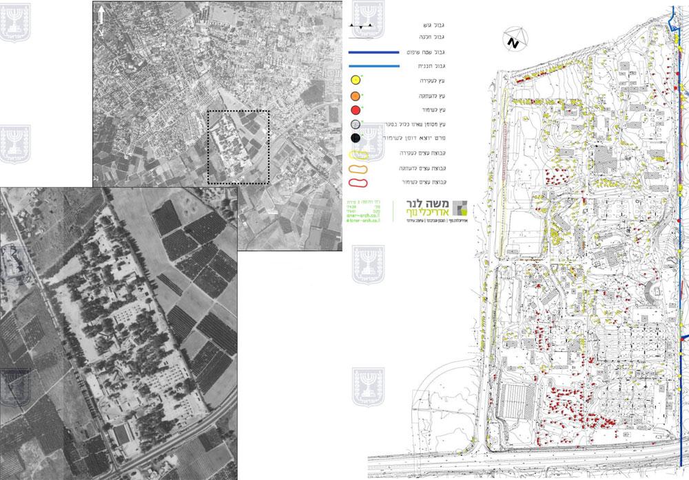 """מימין: סקר הצמחייה שערך משה לנר. השטחים המסומנים בצהוב: עצים שמיועדים להיעקר. משמאל: תצלום אוויר של האזור מ-1988 (מתוך אתר משרד הפנים, מקור תצ""""א: מפ""""י)"""