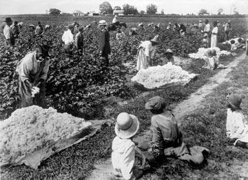 קוטפי כותנה בדרום קרולינה, 1935 (צילום: gettyimages)
