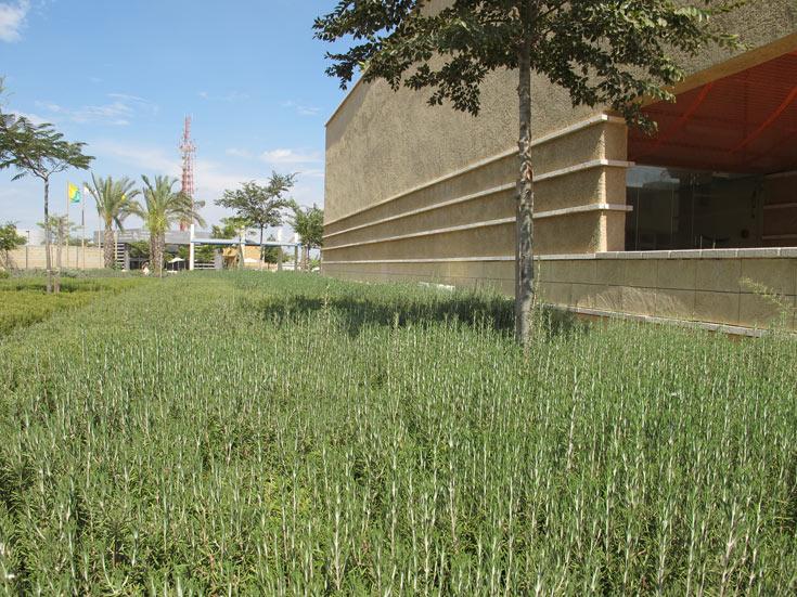 צמחי תבלין, כחלק מפיתוח הנוף בבסיס (צילום: מיכאל יעקבסון)