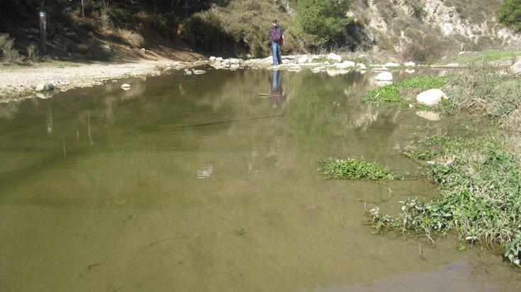 חיבור הנחלים גוש חלב וצבעון יוצר שלולית ענקית (צילום: דרור זבדי)